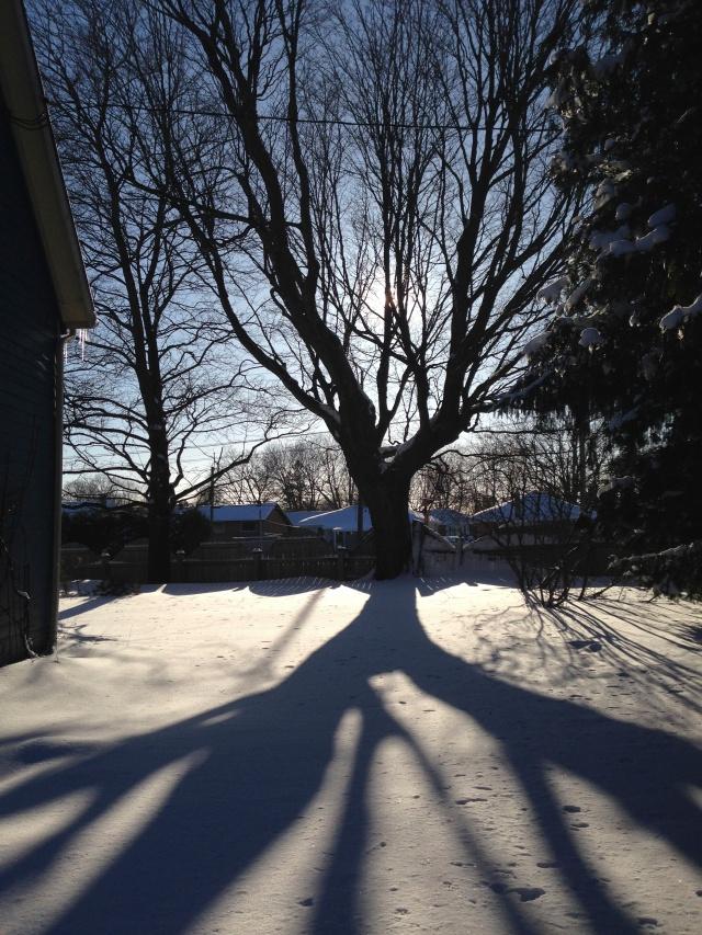 treeshadowIMG_5644