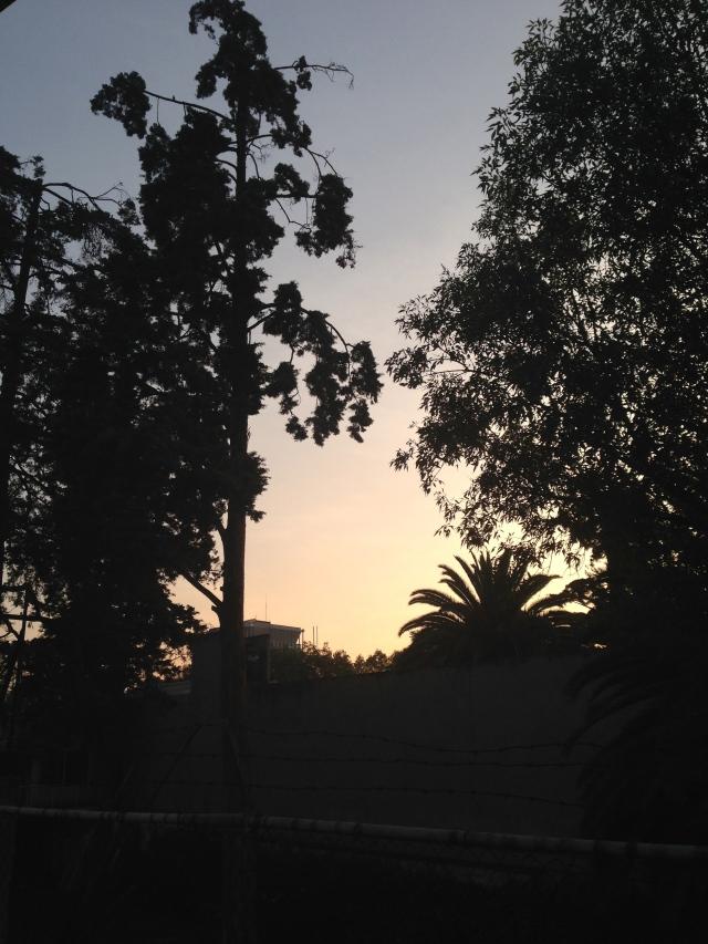01 dawn IMG_6776