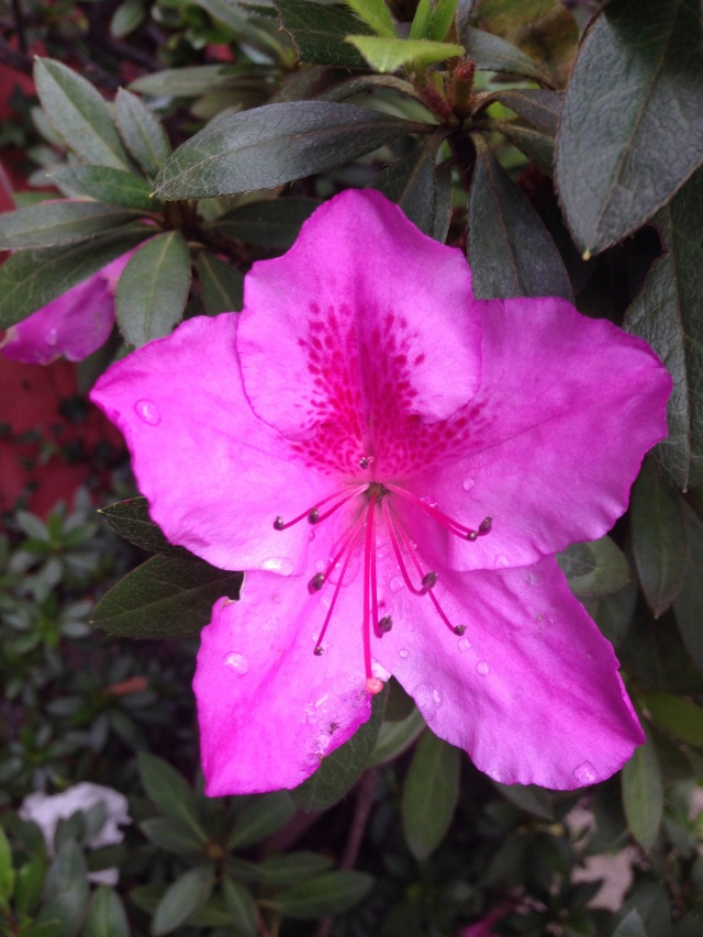 05 Flower IMG_6731