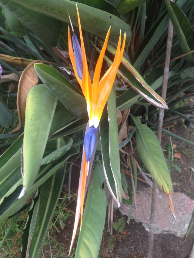 03 orange and blue flower IMG_6867