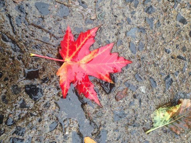 03 red leaf IMG_6831