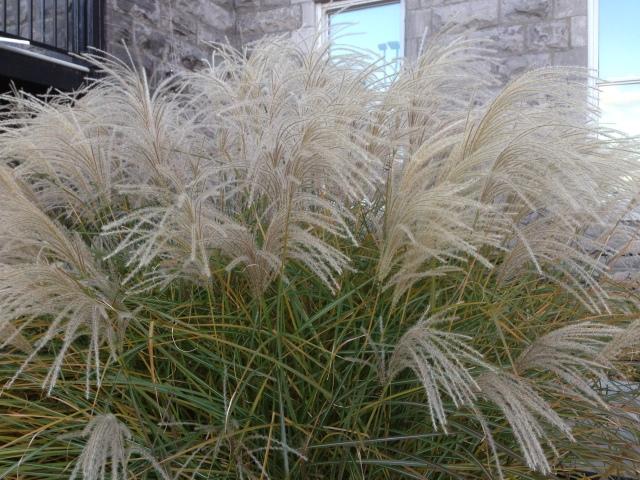 07 last grasses IMG_6836
