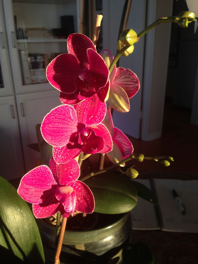 06 Red orchid IMG_6969