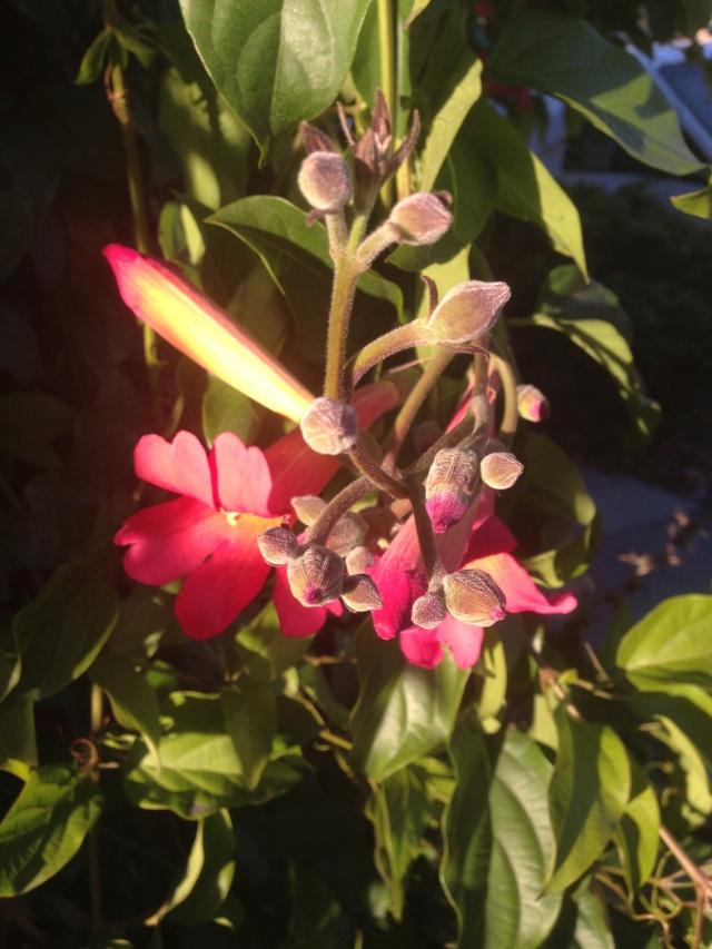 03 red flowerIMG_6936