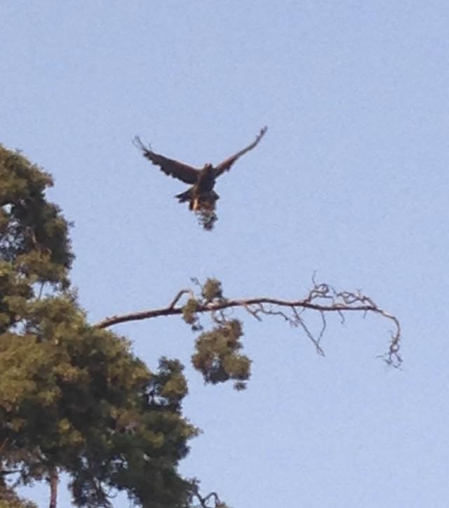 07 eagle IMG_6775