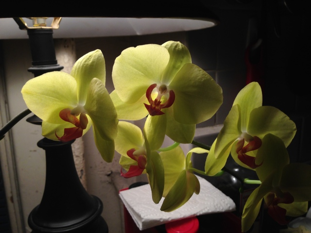 07 flowers of light IMG_7442