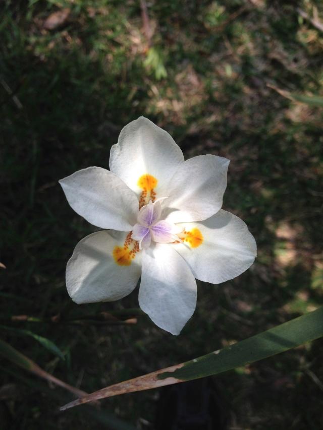 04 white flower IMG_7724