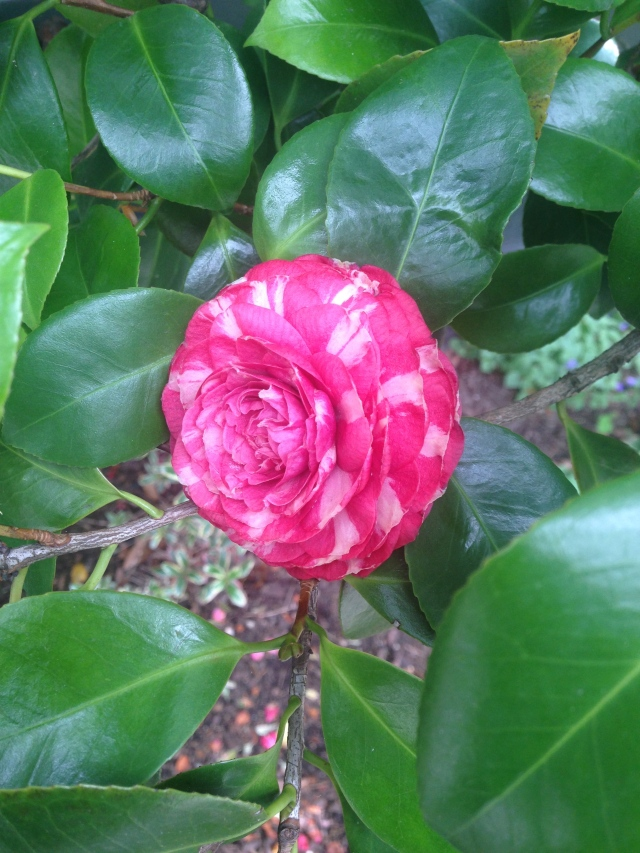 02 Crimson flowerIMG_7945