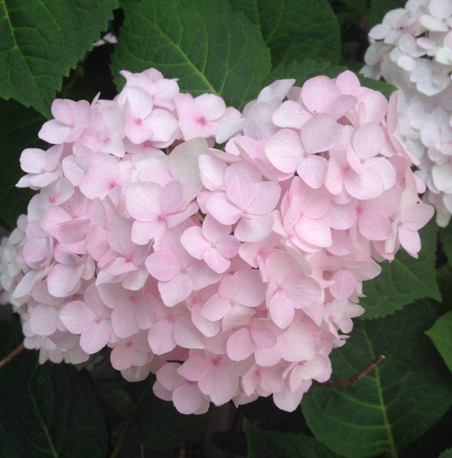 01-flower-img_8410