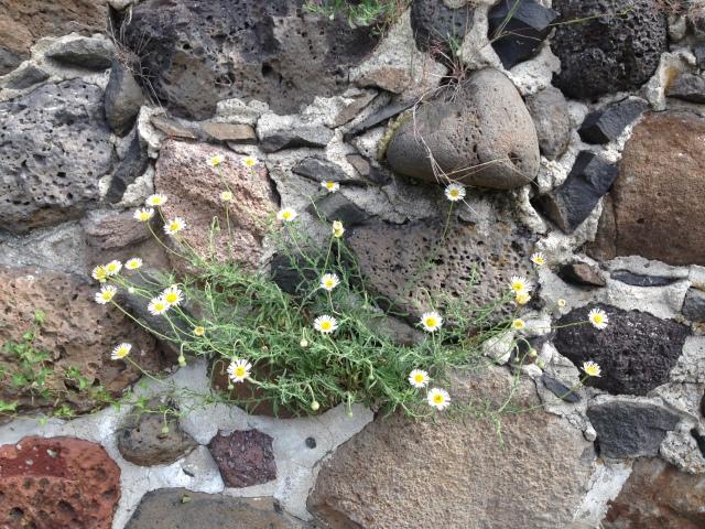 03-flower-rock-img_8860