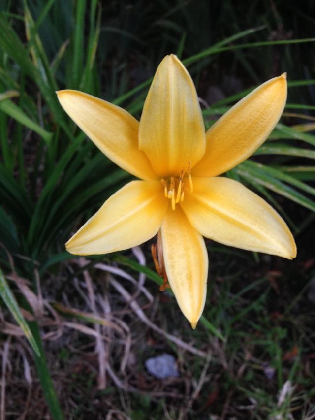 04-golden-flower-img_8702