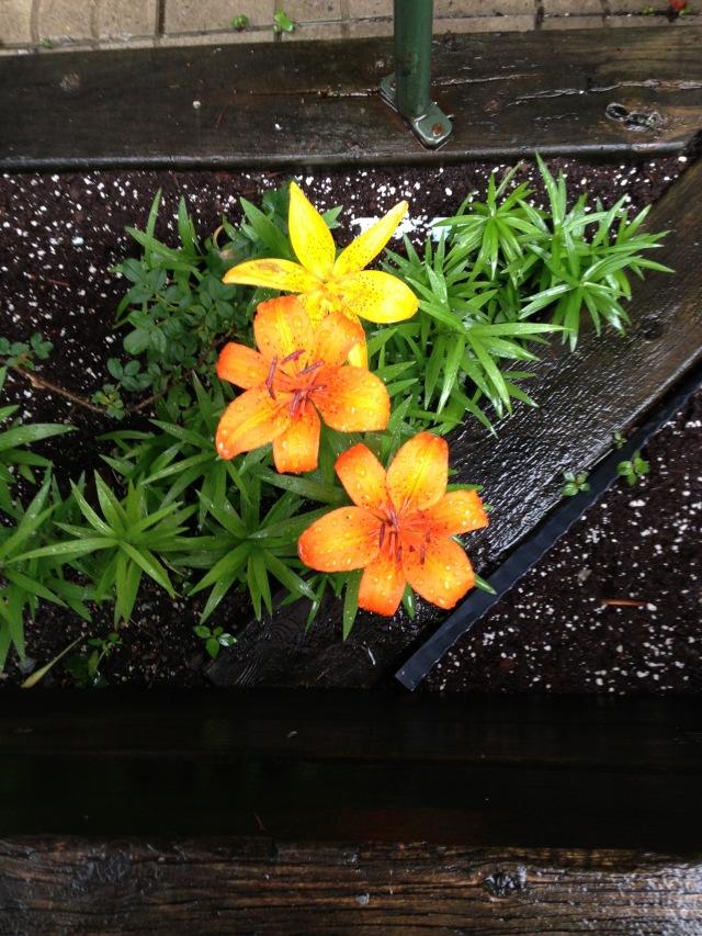 02-yellow-flower-img_3393