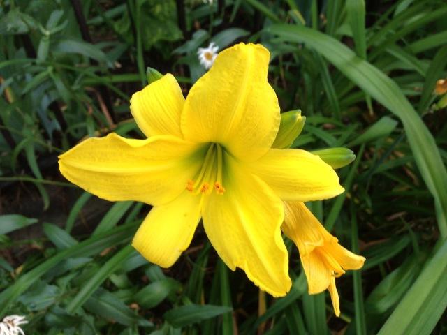 03-gold-flower-img_3424