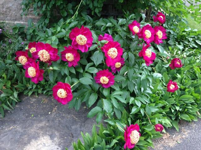 06 roses IMG_0072