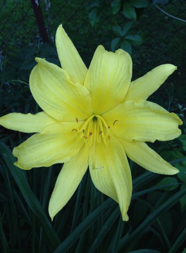05 yellow sun IMG_0534
