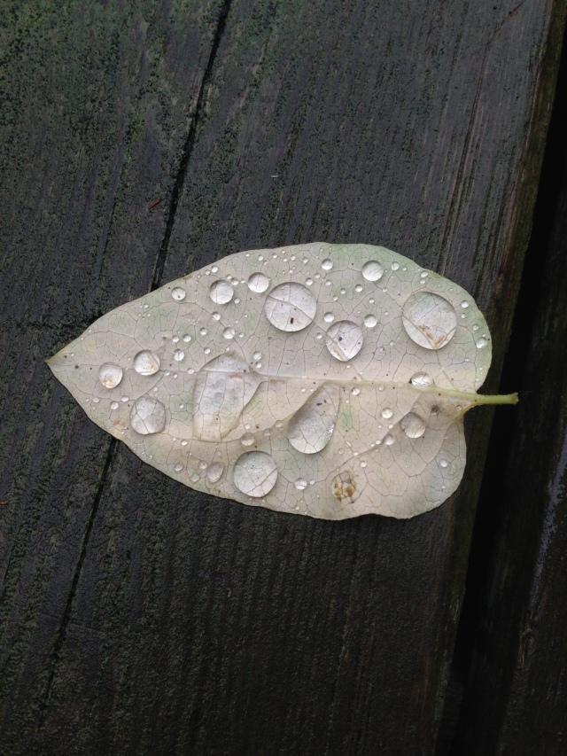 06 Leaf gems IMG_3344