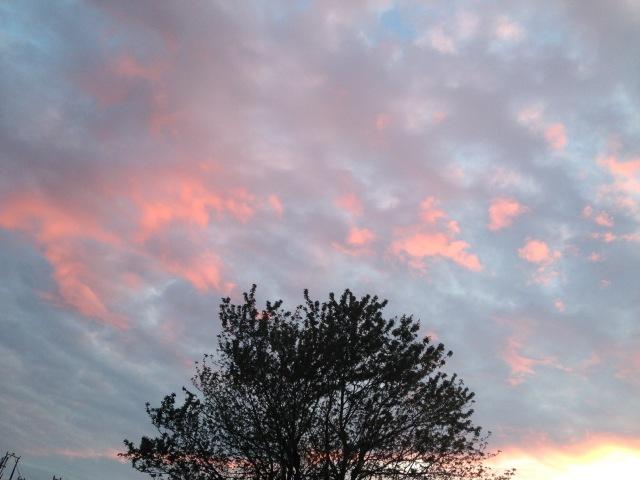 02 Pink sky and tree IMG_6311